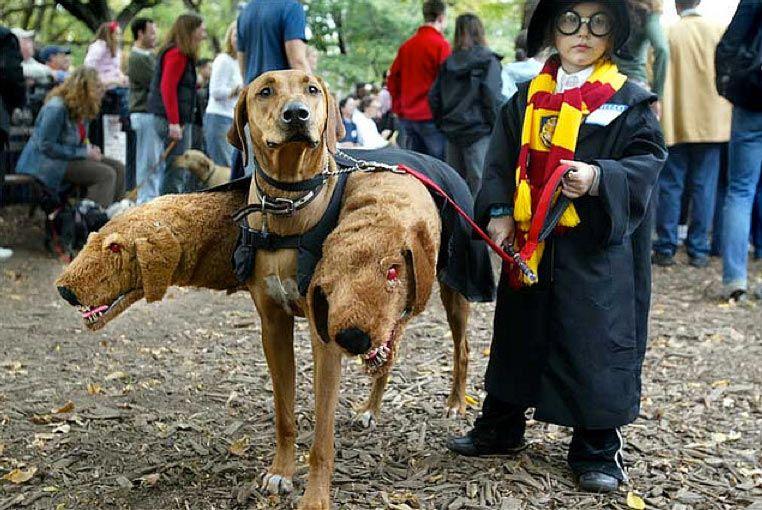 Parada Halloweenowa Psów