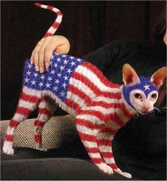 independencedaycat