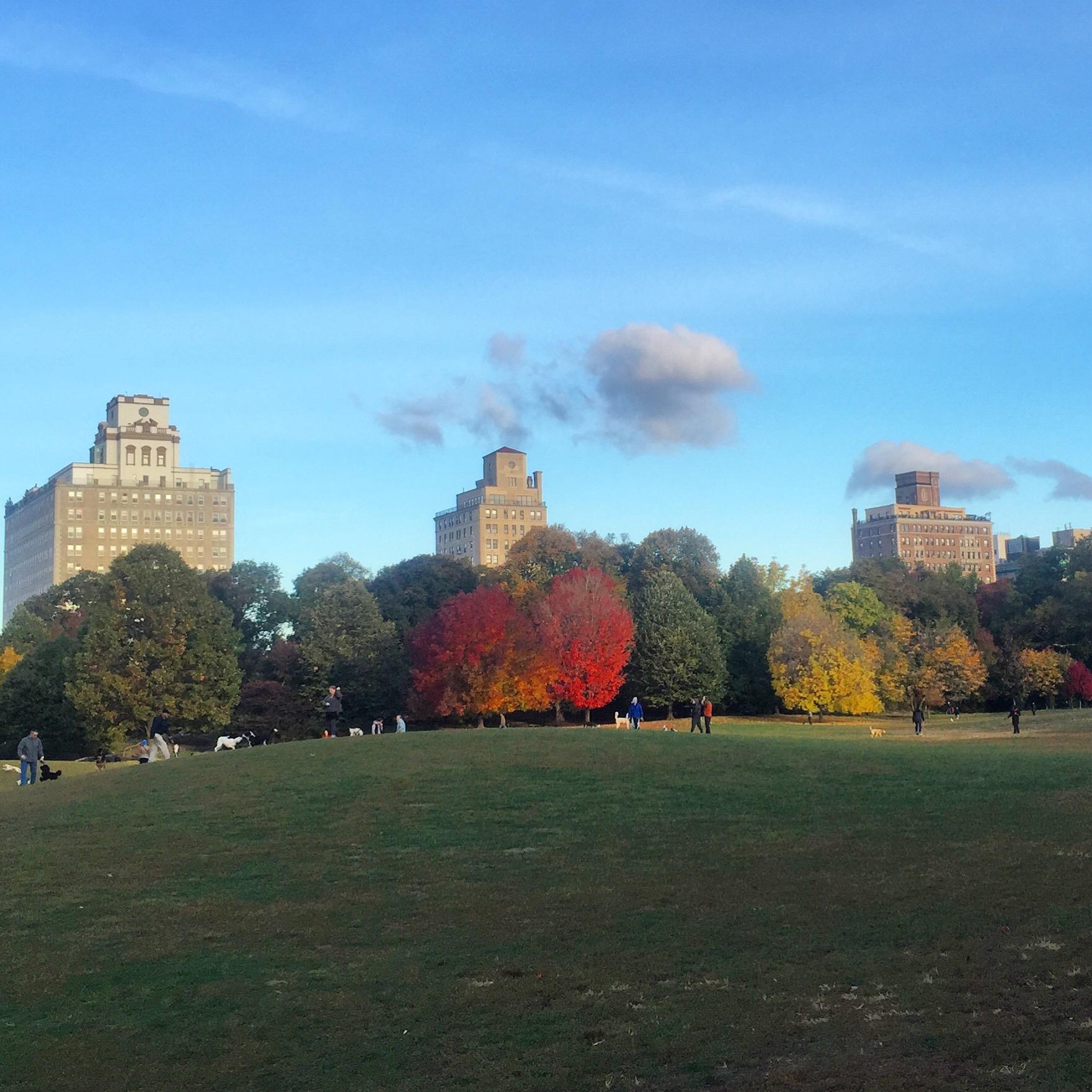 zdjęcia Nowy Jork
